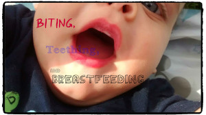 Biting, teething and breastfeeding