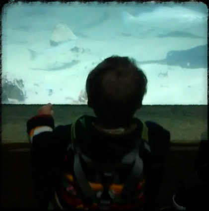 Baby Friendly London. The London Aquarium. Navigating London with babies and toddlers, fun activities, from Baby-Brain.co.uk